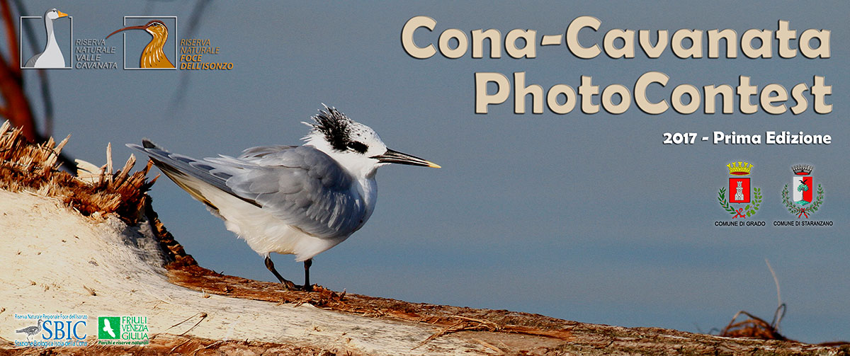 cona cavanata photocontest 2017